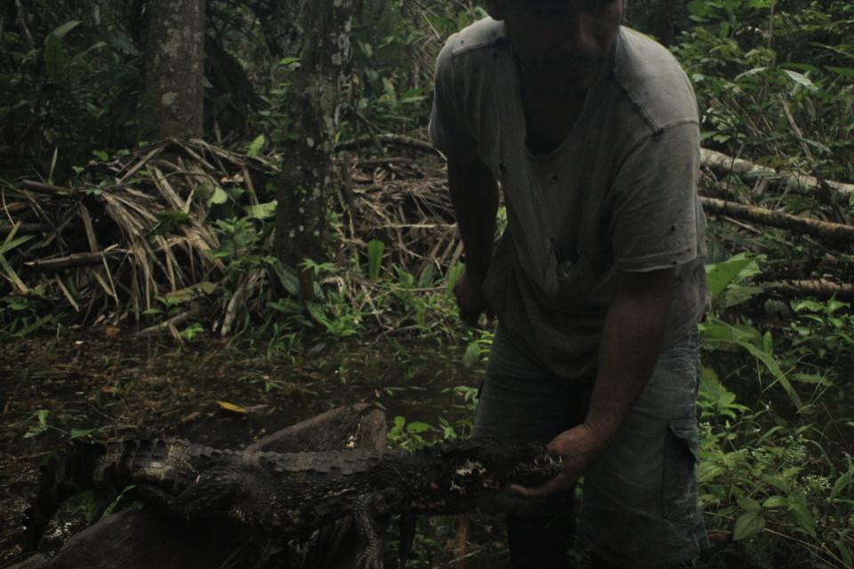 La chasse au crocodile